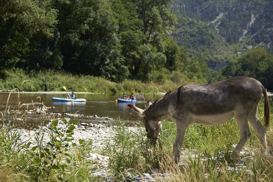 Eselwandern zwischen Fluss und Einöde