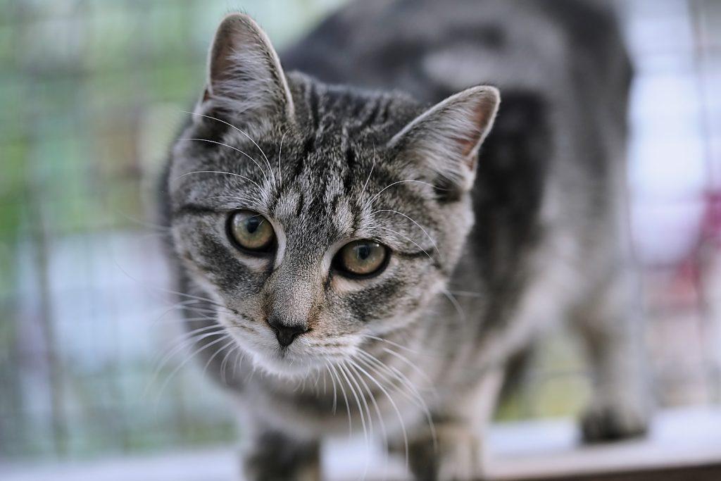 Fotografie einer Katze