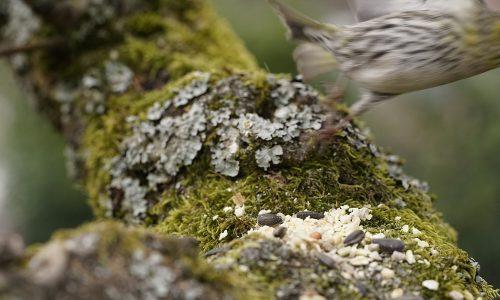 Wenn Vogelmodels das Weite suchen