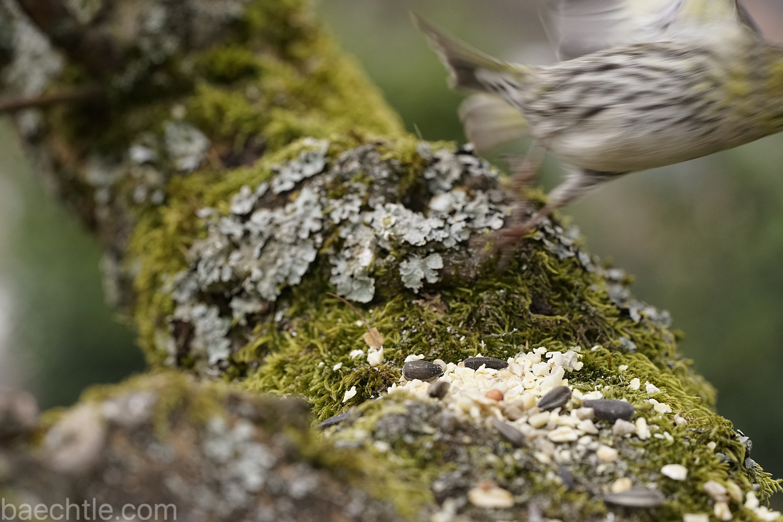 Abgehoben – wenn Vogelmodels das Weite suchen