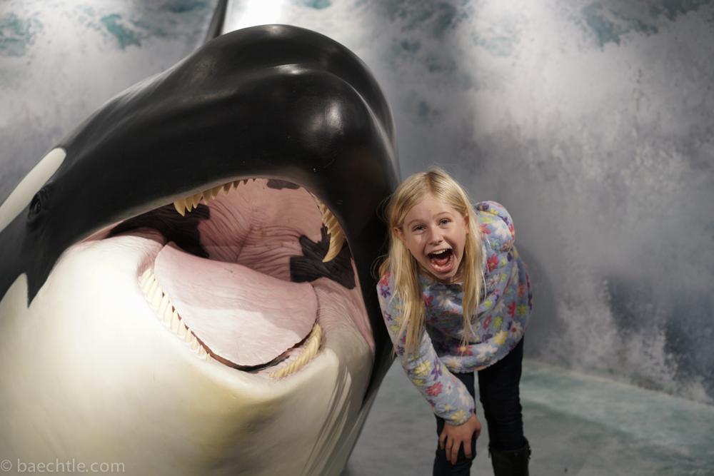 Lachen mit dem Orca
